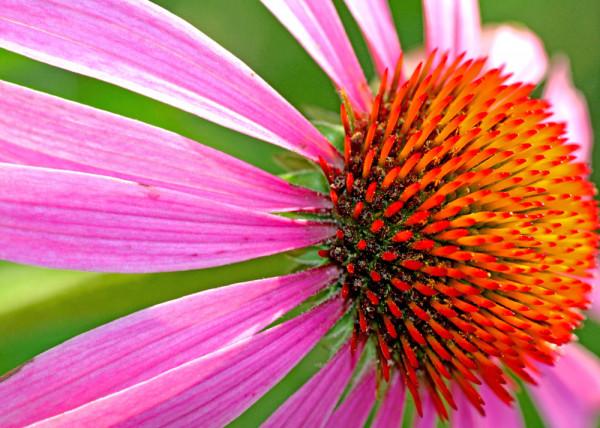 Flower 50 Fototapete