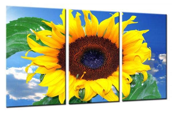 Sunflower  7 - Mehrteiliges Leinwandbild