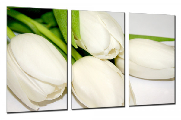 White Tulips 5 - Mehrteiliges Leinwandbild