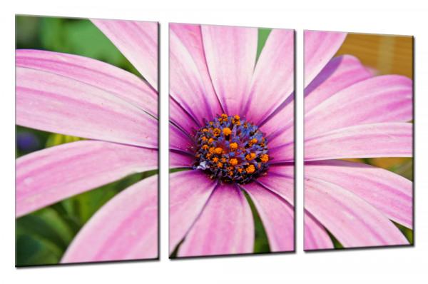 Flower Melody - Mehrteiliges Leinwandbild