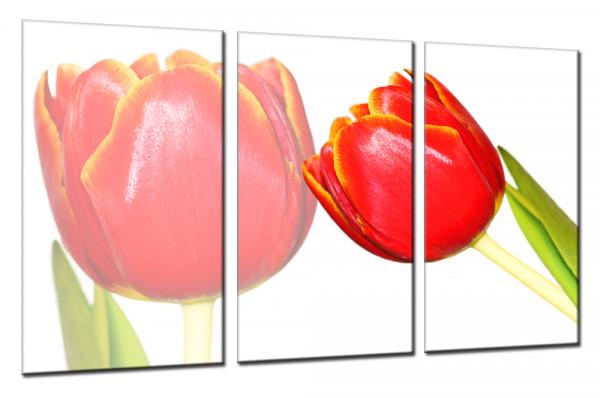 Red Tulip 148 - Mehrteiliges Leinwandbild