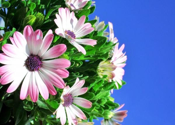 Flower 29 Fototapete