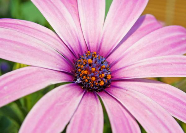 Flower Melody Fototapete