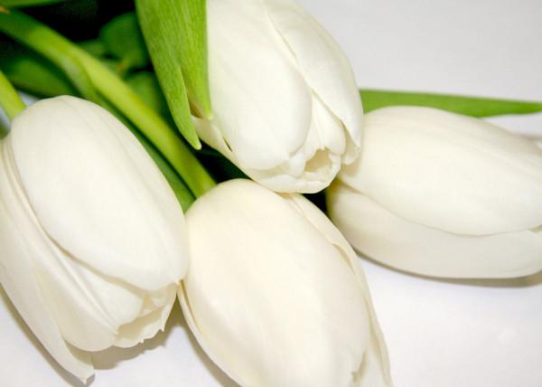 White Tulips 5 Fototapete