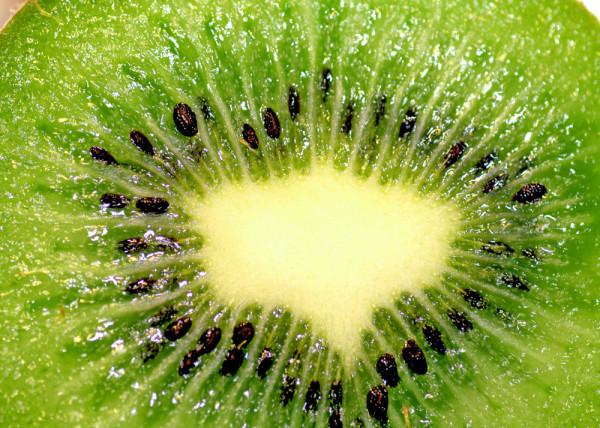 Fototapete Kiwi
