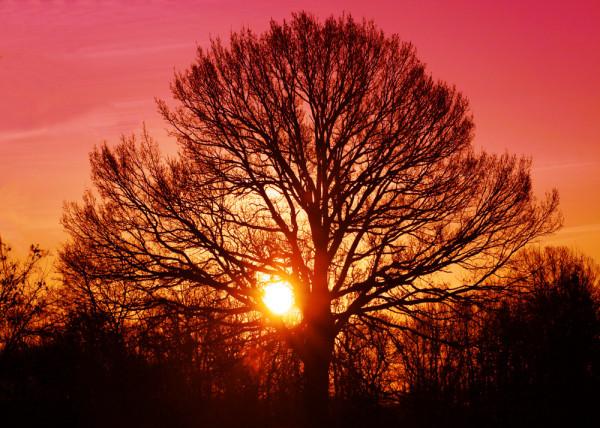 Fototapete Tree of Life 2
