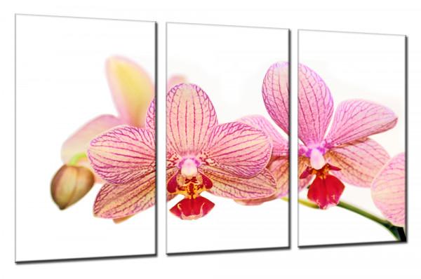 Orchidee 1 - Mehrteiliges Leinwandbild