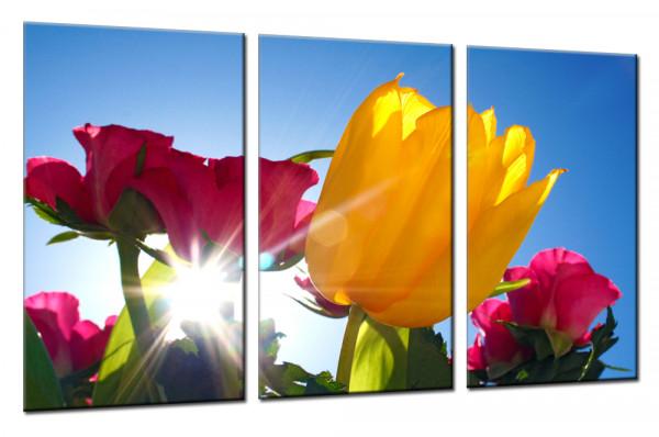 Sunshine Tulips 2 - Mehrteiliges Leinwandbild